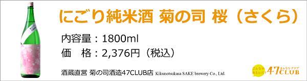 kikunotsukasa_sakura1800