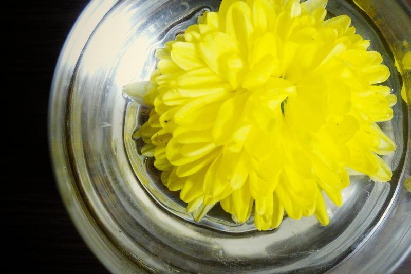 不老長寿の菊で秋を祝おう!重陽の節句のはなし